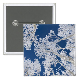 Aspen Trees with Snow Button