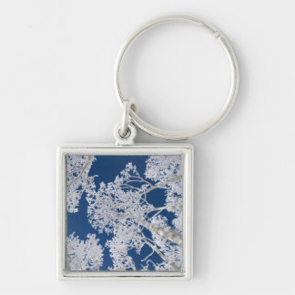 Aspen Trees with Snow Keychain