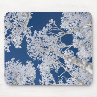 Aspen Trees with Snow Mouse Pad