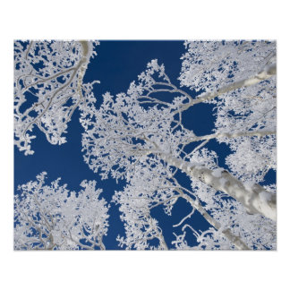 Aspen Trees with Snow Poster