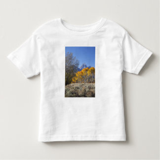 Aspen trees with the Teton mountain range 3 Toddler T-shirt