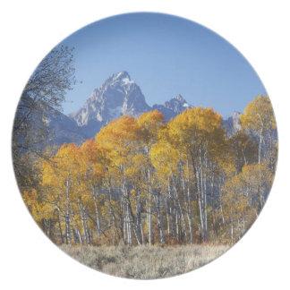 Aspen trees with the Teton mountain range 4 Dinner Plate