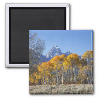 Aspen trees with the Teton mountain range 4 Magnet