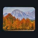 "Aspen trees with the Teton mountain range 5 Magnet<br><div class=""desc"">Jamie &amp; Judy Wild\\COPYRIGHT Jamie &amp; Judy Wild / DanitaDelimont.com 