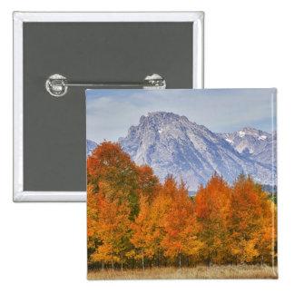 Aspen trees with the Teton mountain range 5 Pinback Button