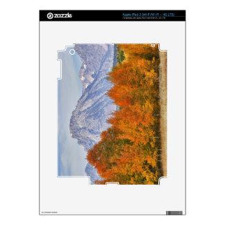 Aspen trees with the Teton mountain range 5 iPad 3 Skin