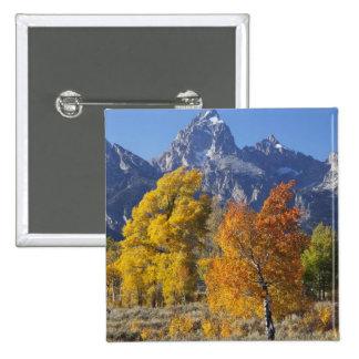 Aspen trees with the Teton mountain range 6 Button