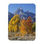 Aspen trees with the Teton mountain range 6 Vinyl Magnets