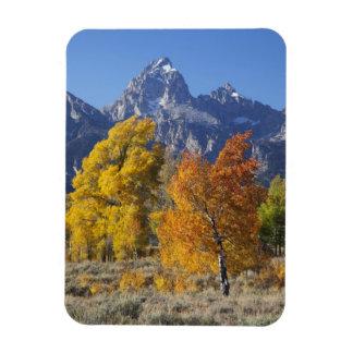 Aspen trees with the Teton mountain range 6 Rectangular Photo Magnet