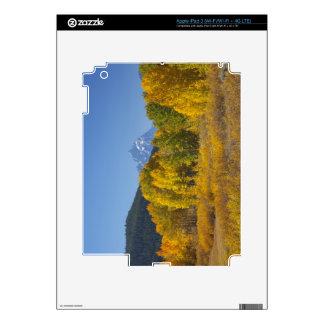 Aspen trees with the Teton mountain range 7 iPad 3 Skin