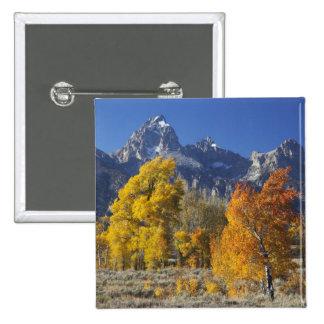 Aspen trees with the Teton mountain range Button