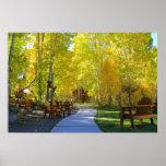 """Aspen Walkway"" Fall Colors, Hope Valley CA. Posters"