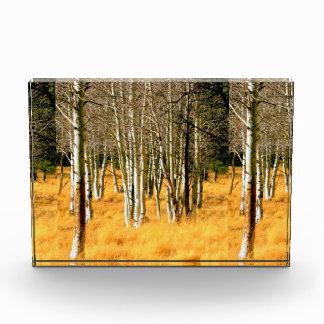aspen woods award