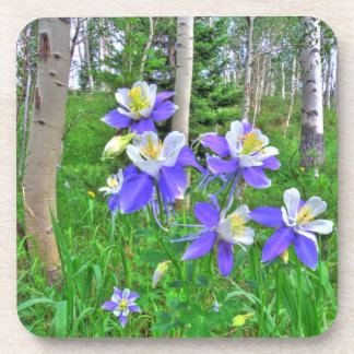Aspens and Columbines Drink Coaster