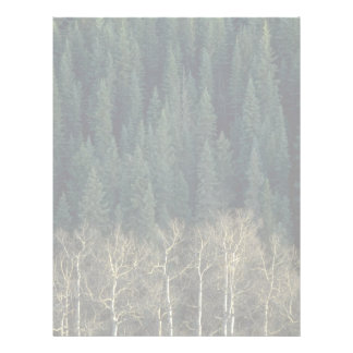 Aspens and spruce forest, Sheep River Valley, Albe Custom Letterhead