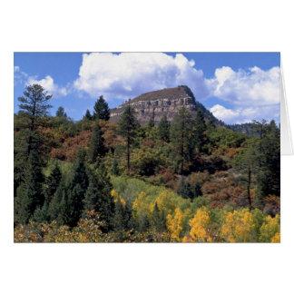 Aspens, Colorado Rockies Greeting Card