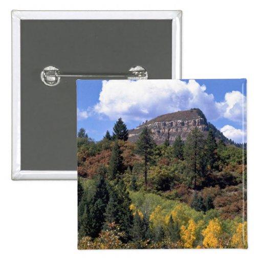 Aspens, Colorado Rockies Pins