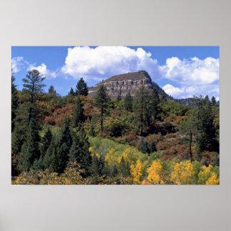 Aspens, Colorado Rockies Poster
