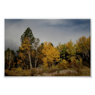 Aspens colorize the Colorado foothills Poster