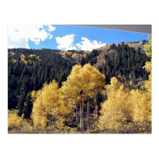 Aspens grove postcard