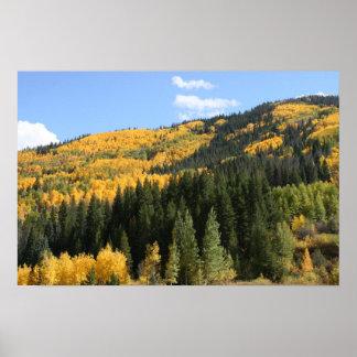 Aspens in Colorado Poster