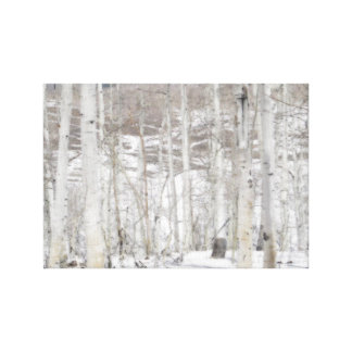 Aspens in the Snow Canvas Print