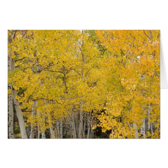 Aspens on the Colorado Trail Card