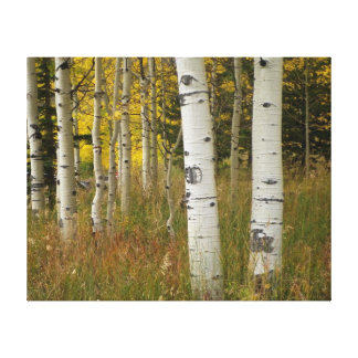 Aspens - Wrapped Canvas