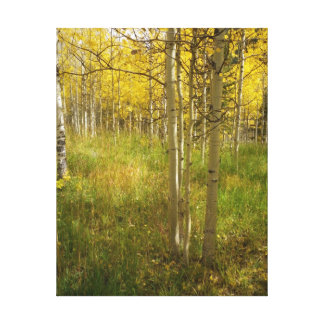 Aspens Wrapped Canvas