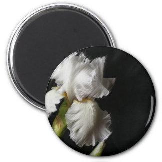 Áspero blanco del iris pintado imanes para frigoríficos