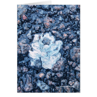 Asphalt rose Card