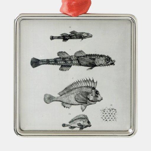 Aspidophorus Chiloensis y Agriopus Hispidus Ornamento Para Arbol De Navidad