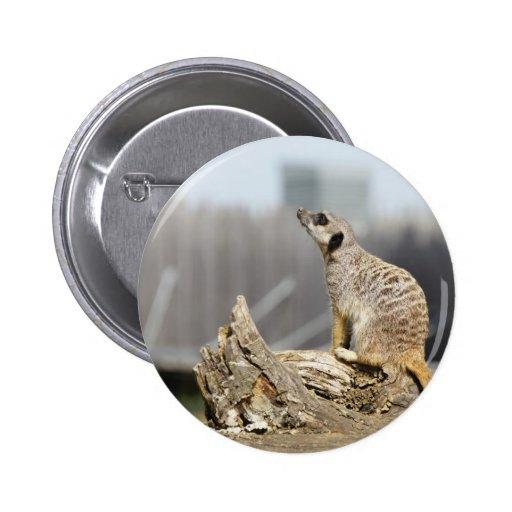 Aspiración de Meerkat Pin