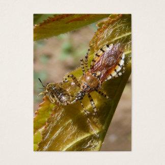 Assassin bug  ~ ATC Business Card