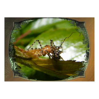 Assassin bug  ~ ATC Large Business Cards (Pack Of 100)