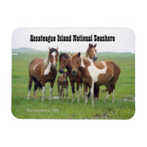 Assateague Horses Magnet
