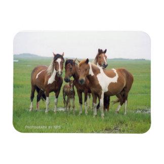 Assateague Horses Magnet Flexible Magnet