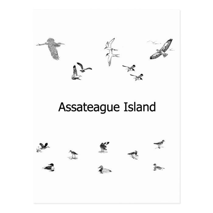 Assateague Island Birdwatching Line Art Postcard