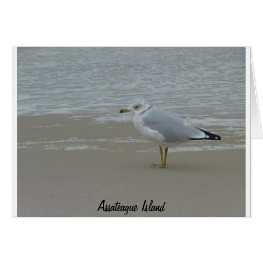 Assateague Island Gull Blank Card
