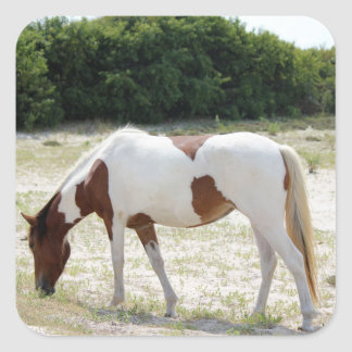 Assateague Island horse Square Sticker