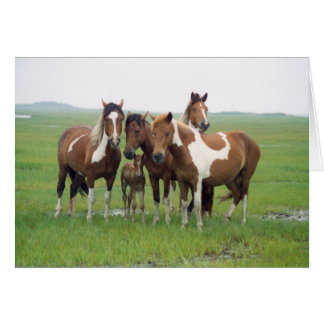 Assateague Island Horses Blank Card
