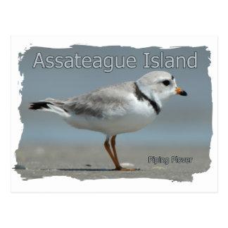 Assateague Island Piping Plover Postcard