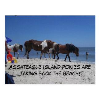 Assateague Island Ponies Take Back Beach Postcard