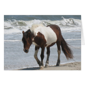 Assateague Island Pony Card