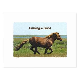 Assateague Island (running stallion logo) Postcard