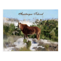 Assateague Island Wild Horse Postcard