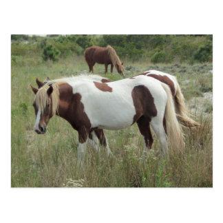 Assateague Ponies Postcards