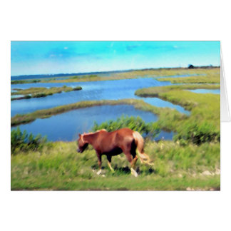 Assateague pony card