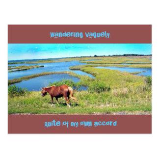 Assateague Pony Postcard