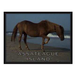 Assateague Wild Horses 1 Postcard